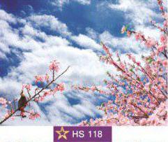 آسمان مجازی|HS118